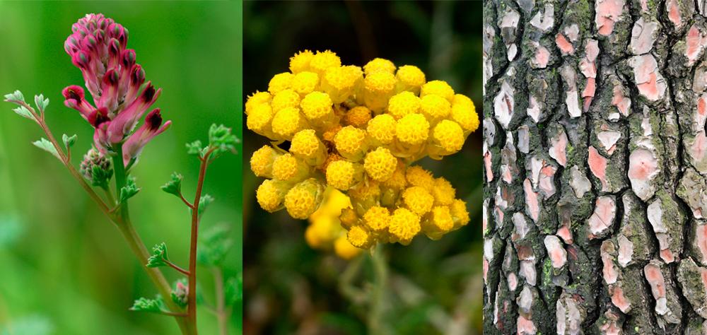 remedios naturales contra las alergias Erbalerge Santiveri