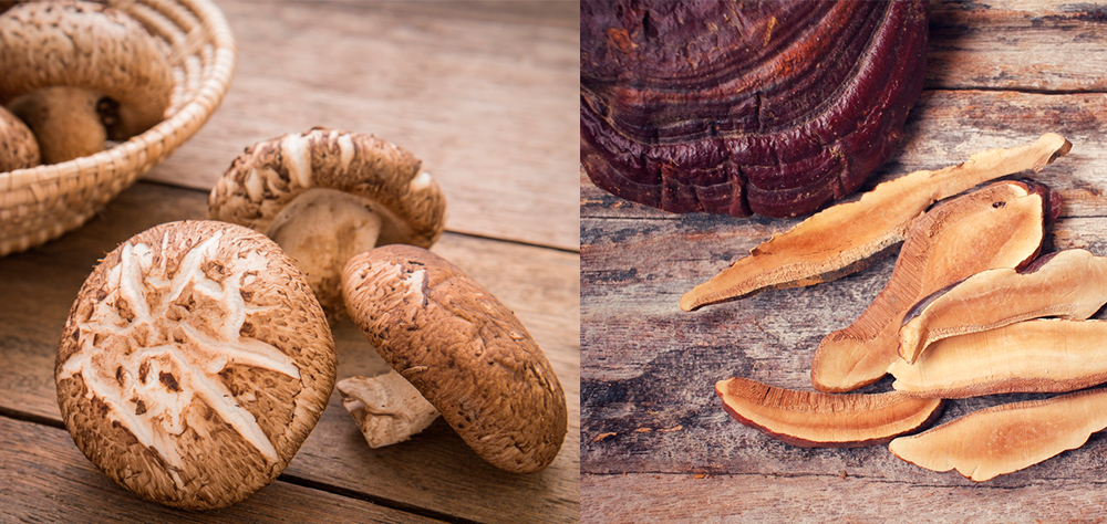 hongos shiitake y reishi defensas y contra alergias