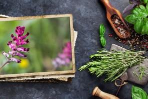 La alergia primaveral ya está aquí, ponle freno con ayuda de las plantas