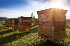 Propiedades medicinales de la miel y otros productos de la colmena