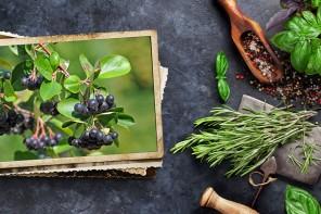 Aronia, la planta que cuida de tu circulación