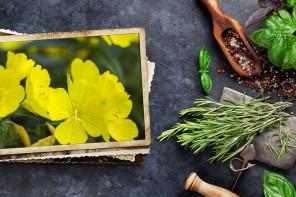 Aceite de onagra, secreto de belleza y bienestar