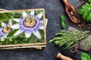 Pasiflora, una ayuda para reconciliarte con el sueño