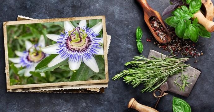 Passiflora, per sonni sereni