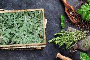 Salvia, cuida las hormonas femeninas