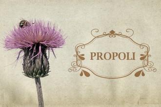 Propoli: proprietà e usi curativi