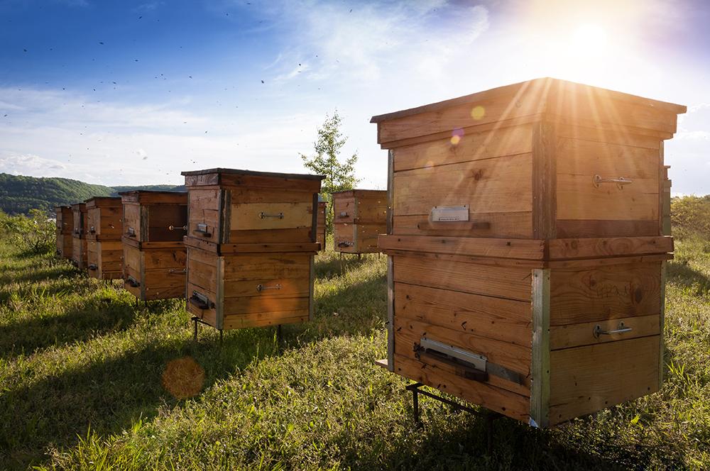 Miele e prodotti dell'alveare