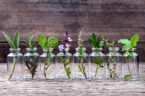Estratti vegetali di piante medicinali, efficaci e facili da usare