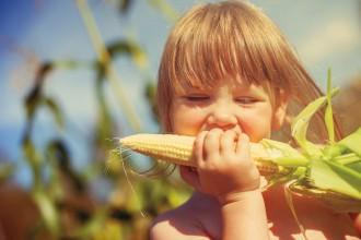 cereales integrales alimentos biológicos Cereali integrali