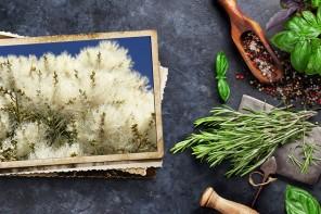 Árbol del té, una defensa para tu piel