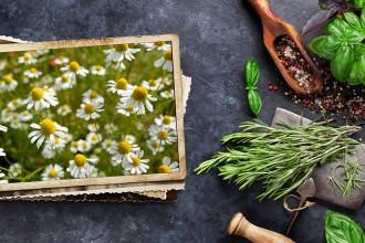 Camomilla, un'alternativa naturale per digestioni felici
