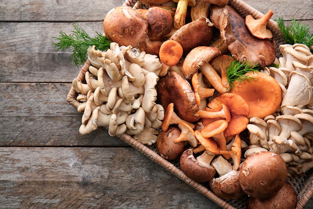 micosan-funghi