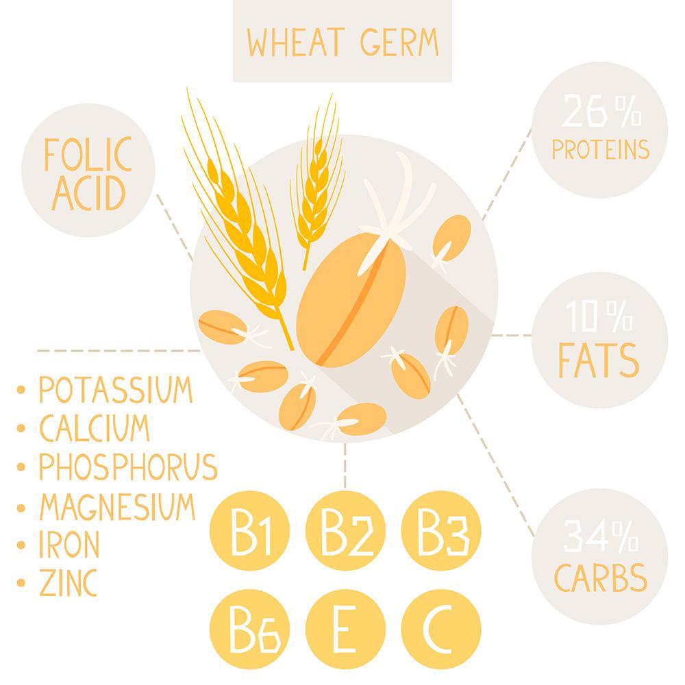 germen de trigo infografia