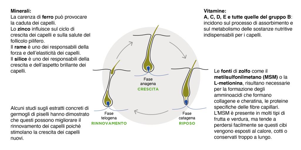 ciclo dei capelli VIGOR_HAIR