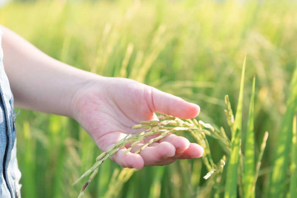 Alimentos bio santiveri