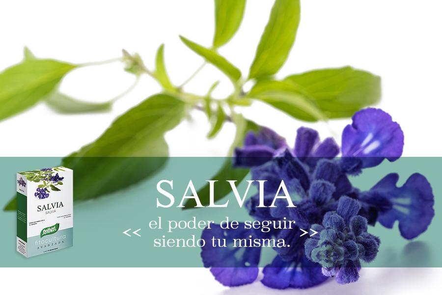 Salvia Santiveri Fitocultura