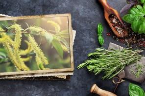 Salice, antinfiammatorio e analgesico naturale